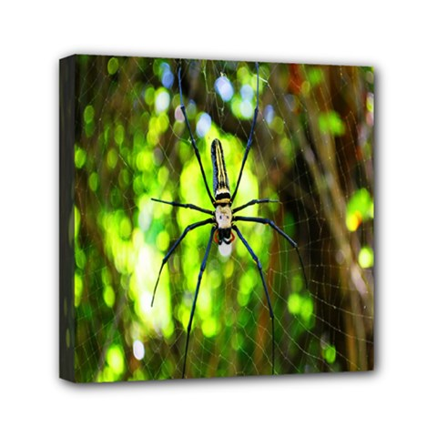 Spider Spiders Web Spider Web Mini Canvas 6  X 6