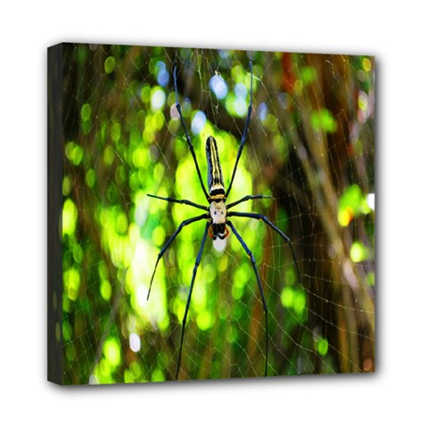 Spider Spiders Web Spider Web Mini Canvas 8  X 8