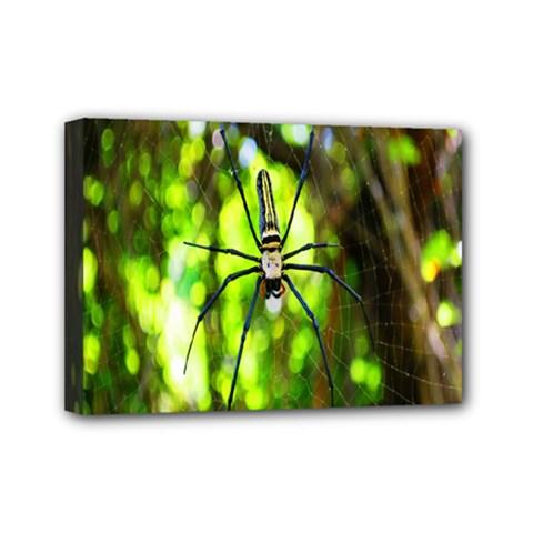 Spider Spiders Web Spider Web Mini Canvas 7  x 5