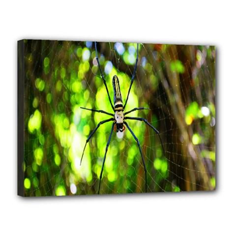 Spider Spiders Web Spider Web Canvas 16  x 12