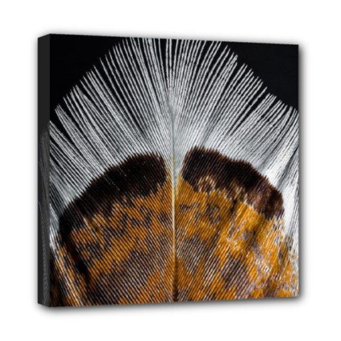 Spring Bird Feather Turkey Feather Mini Canvas 8  x 8
