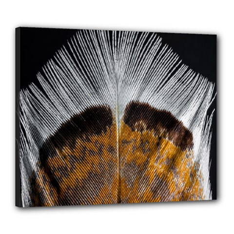 Spring Bird Feather Turkey Feather Canvas 24  x 20