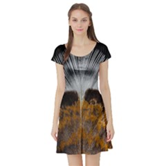Spring Bird Feather Turkey Feather Short Sleeve Skater Dress
