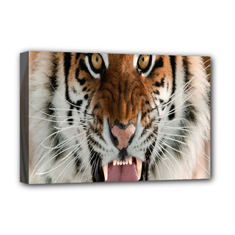 Tiger  Deluxe Canvas 18  x 12