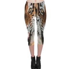 Tiger  Capri Leggings