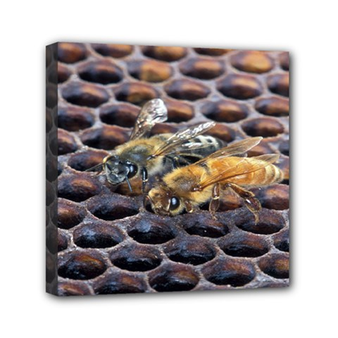 Worker Bees On Honeycomb Mini Canvas 6  x 6