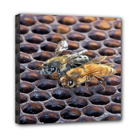 Worker Bees On Honeycomb Mini Canvas 8  X 8