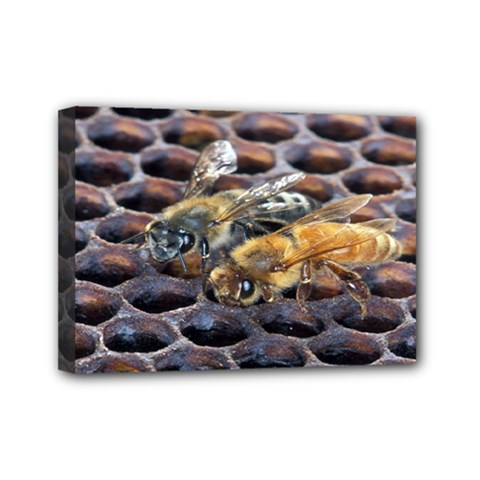 Worker Bees On Honeycomb Mini Canvas 7  x 5