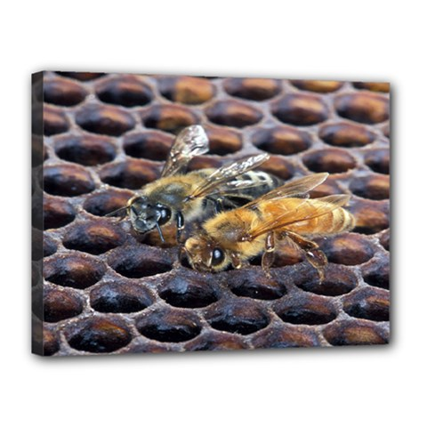 Worker Bees On Honeycomb Canvas 16  x 12