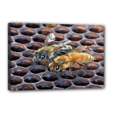 Worker Bees On Honeycomb Canvas 18  X 12