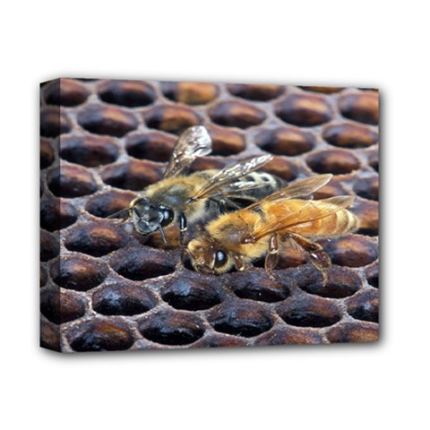 Worker Bees On Honeycomb Deluxe Canvas 14  X 11