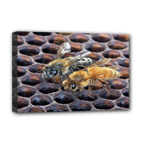 Worker Bees On Honeycomb Deluxe Canvas 18  x 12