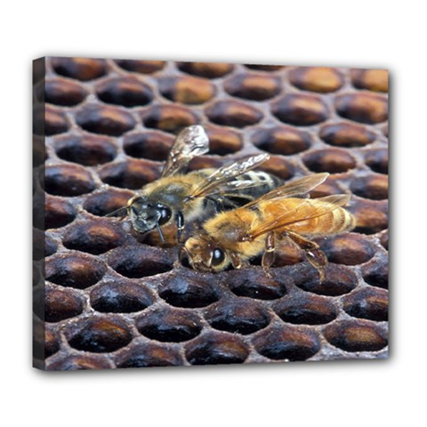 Worker Bees On Honeycomb Deluxe Canvas 24  x 20