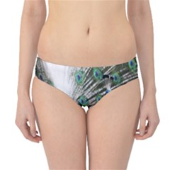 Animal Photography Peacock Bird Hipster Bikini Bottoms