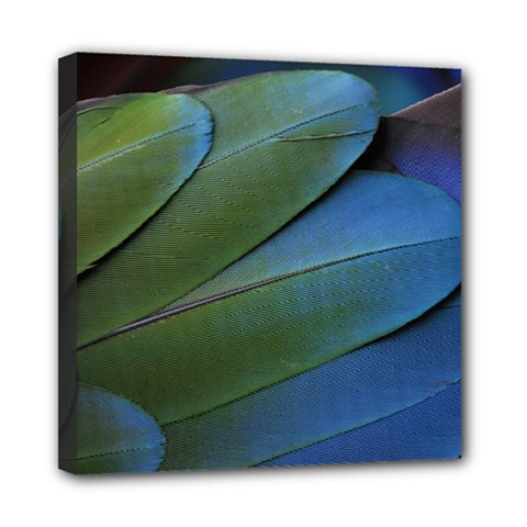 Feather Parrot Colorful Metalic Mini Canvas 8  X 8