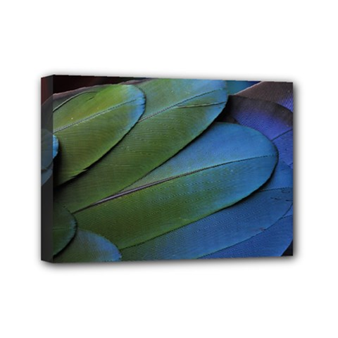 Feather Parrot Colorful Metalic Mini Canvas 7  X 5