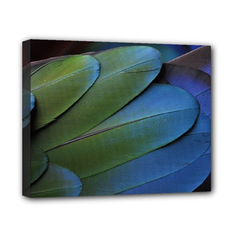 Feather Parrot Colorful Metalic Canvas 10  X 8