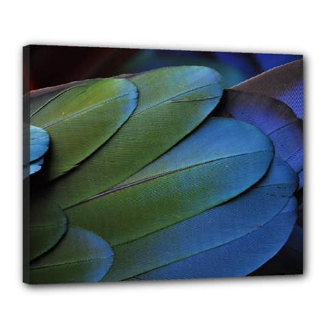 Feather Parrot Colorful Metalic Canvas 20  x 16
