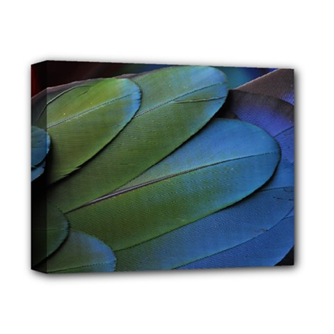 Feather Parrot Colorful Metalic Deluxe Canvas 14  X 11