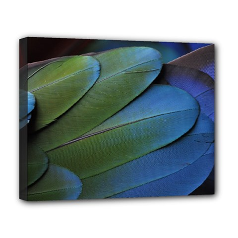 Feather Parrot Colorful Metalic Deluxe Canvas 20  X 16