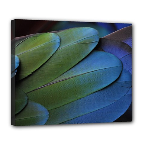 Feather Parrot Colorful Metalic Deluxe Canvas 24  X 20
