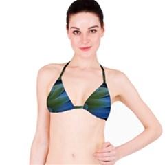 Feather Parrot Colorful Metalic Bikini Top