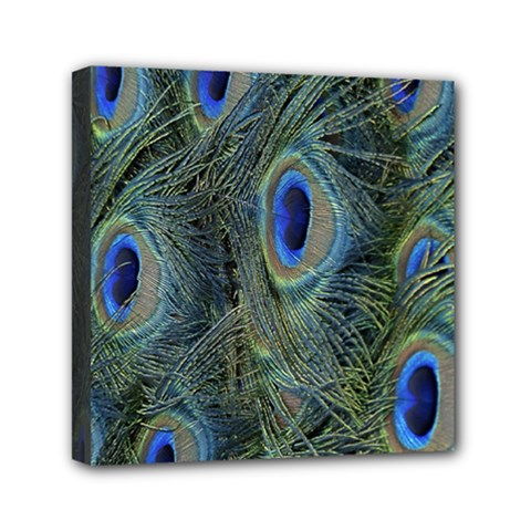 Peacock Feathers Blue Bird Nature Mini Canvas 6  X 6