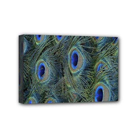 Peacock Feathers Blue Bird Nature Mini Canvas 6  X 4