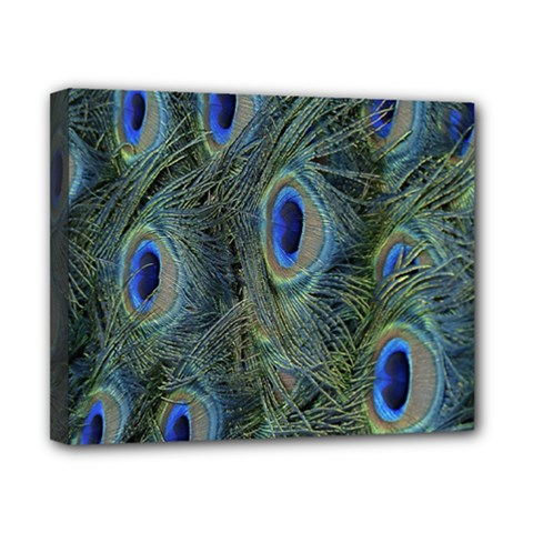 Peacock Feathers Blue Bird Nature Canvas 10  X 8