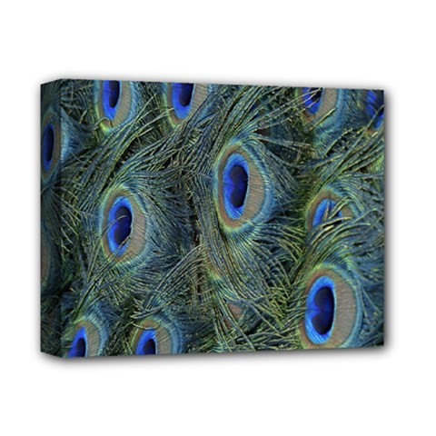 Peacock Feathers Blue Bird Nature Deluxe Canvas 14  X 11
