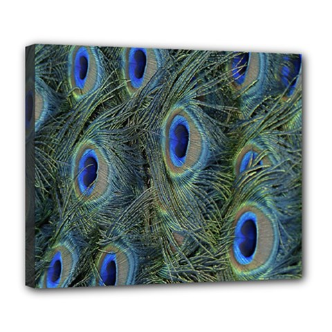 Peacock Feathers Blue Bird Nature Deluxe Canvas 24  X 20