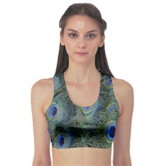 Peacock Feathers Blue Bird Nature Sports Bra