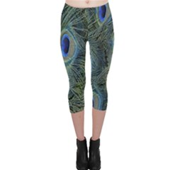 Peacock Feathers Blue Bird Nature Capri Leggings