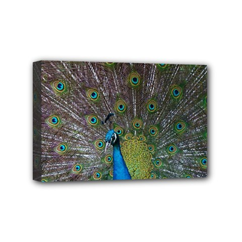 Peacock Feather Beat Rad Blue Mini Canvas 6  X 4