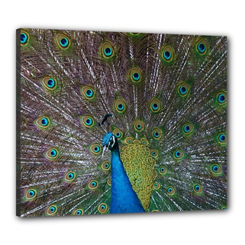 Peacock Feather Beat Rad Blue Canvas 24  X 20