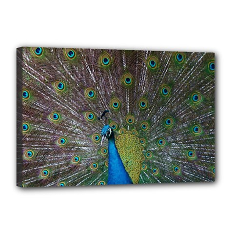 Peacock Feather Beat Rad Blue Canvas 18  X 12