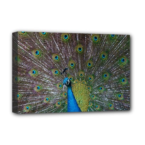 Peacock Feather Beat Rad Blue Deluxe Canvas 18  X 12