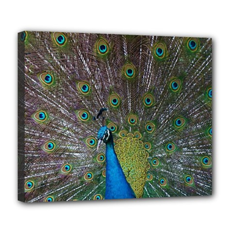 Peacock Feather Beat Rad Blue Deluxe Canvas 24  X 20