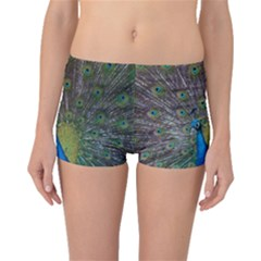 Peacock Feather Beat Rad Blue Boyleg Bikini Bottoms