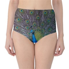 Peacock Feather Beat Rad Blue High Waist Bikini Bottoms