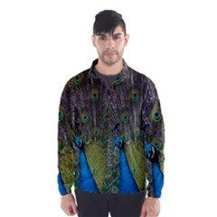 Peacock Feather Beat Rad Blue Wind Breaker (men)