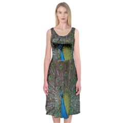 Peacock Feather Beat Rad Blue Midi Sleeveless Dress