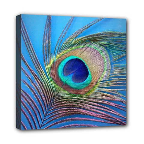 Peacock Feather Blue Green Bright Mini Canvas 8  X 8