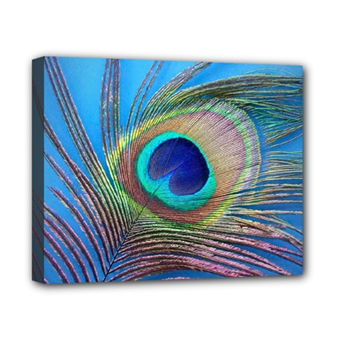 Peacock Feather Blue Green Bright Canvas 10  x 8