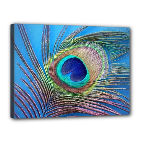 Peacock Feather Blue Green Bright Canvas 16  X 12