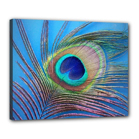 Peacock Feather Blue Green Bright Canvas 20  X 16