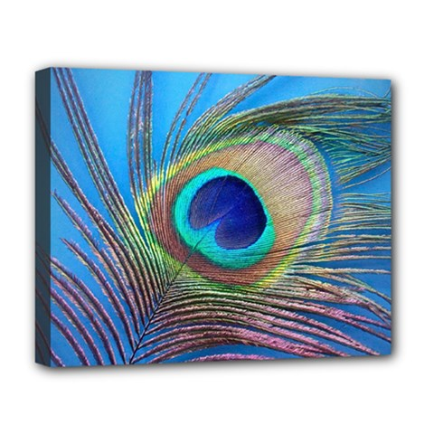 Peacock Feather Blue Green Bright Deluxe Canvas 20  X 16