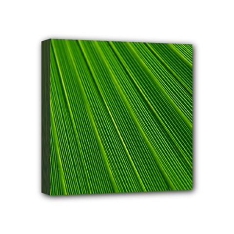 Green Lines Macro Pattern Mini Canvas 4  X 4