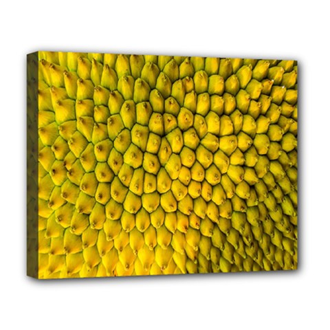Jack Shell Jack Fruit Close Deluxe Canvas 20  X 16