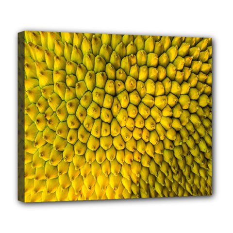 Jack Shell Jack Fruit Close Deluxe Canvas 24  X 20